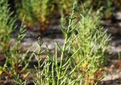 Saída de Campo para Identificação da Flora das Salinas, 21 de Abril