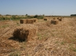 Agricultura biologica de forragens